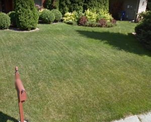 We worked on the plymouth sod installation around this yard expansion - Deer Creek Turf